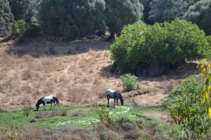 Site de Filitosa